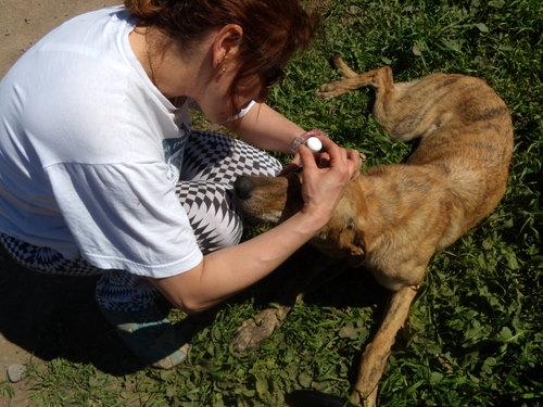 Cecilia aplicando gotas en un ojito enfermo.